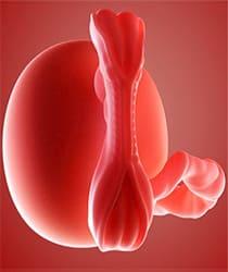 Фото эмбриона на первом месяце беременности