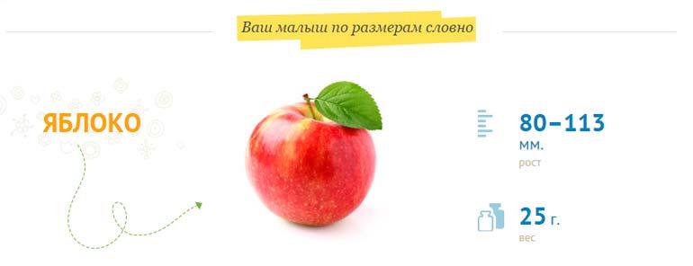 Размер плода на 14 неделе беременности