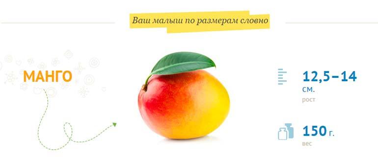 Размер плода на 18 неделе беременности