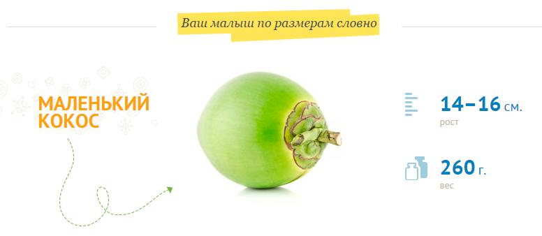 Размер плода на 20 неделе беременности