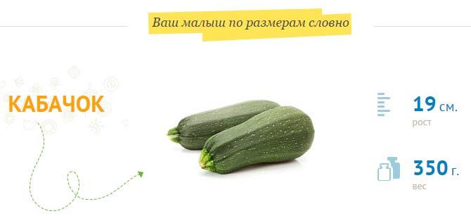 Размер плода на 22 неделе беременности