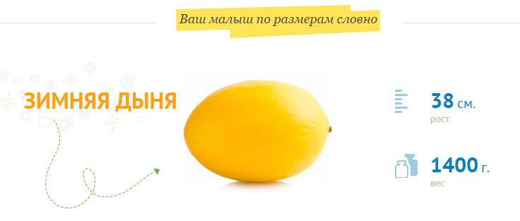 Размер плода на 30 неделе беременности