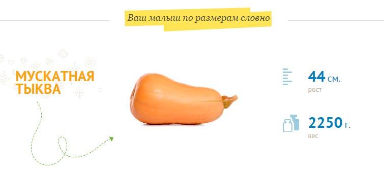 Размер плода на 34 неделе беременности