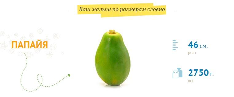 Размер плода на 36 неделе беременности
