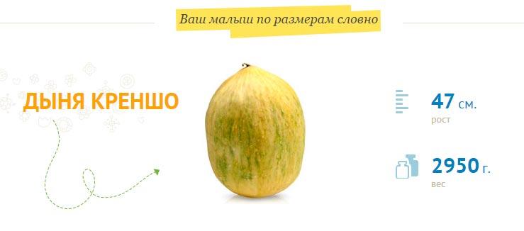 Размер плода на 37 неделе беременности